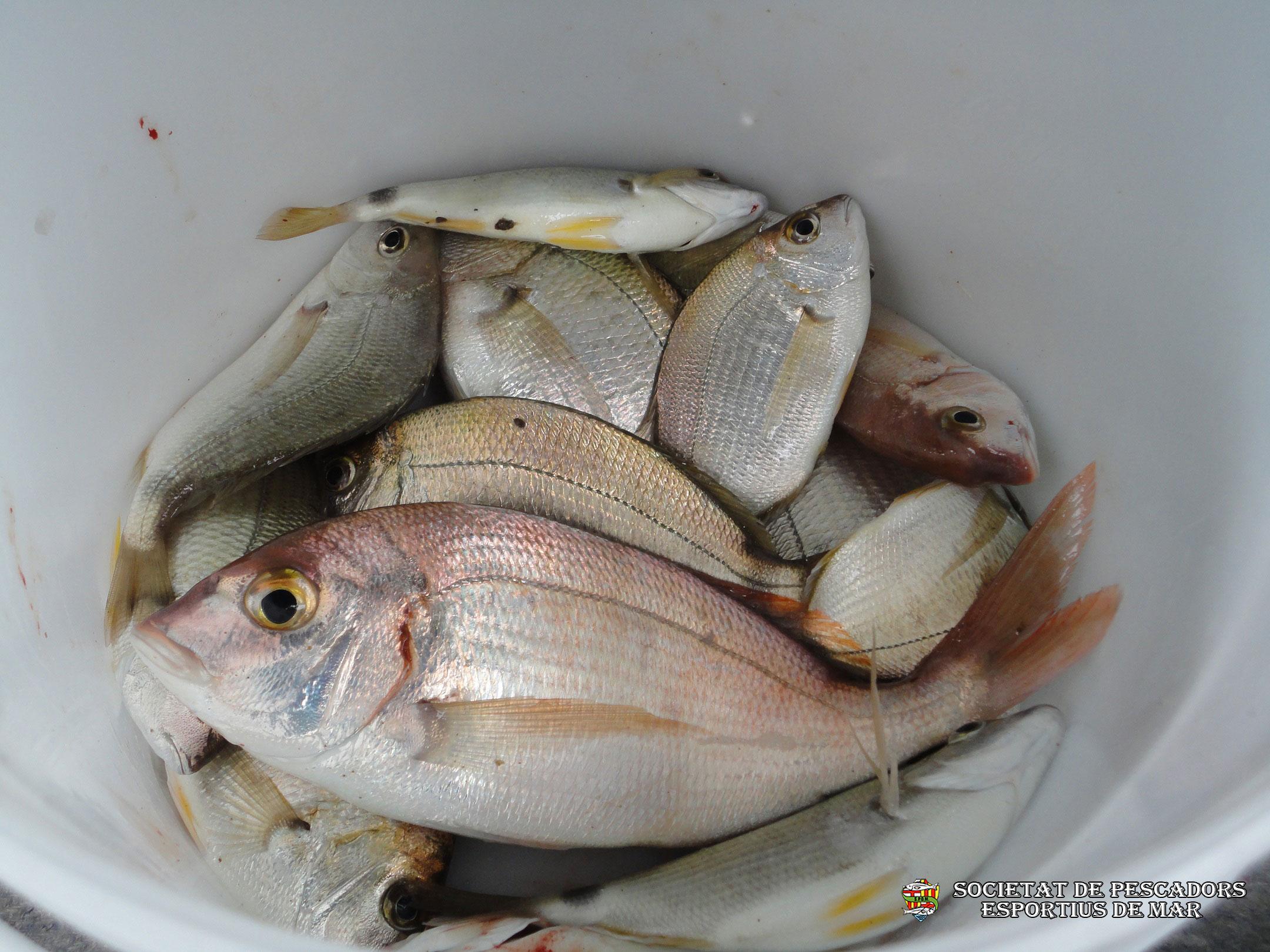 societat-de-pescadors-esportius-de-mar-barcelona-1123(www.societatpescadorsbarcelona