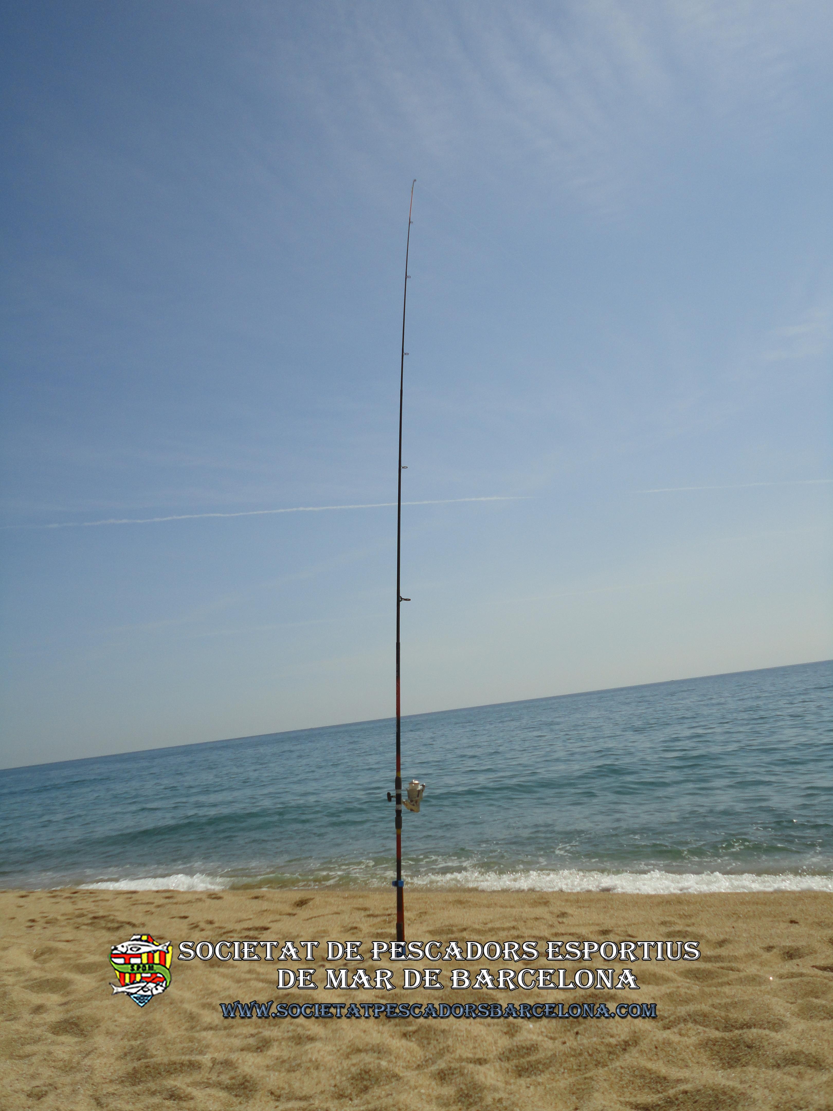 palometa_trachinotus_ovatus_11(www.societatpescadorsbarcelona.com)