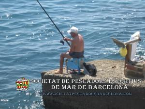 Serra_serranus_cabrilla_06(www.societatpescadorsbarcelona.com)