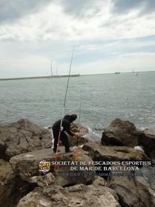 Serra_serranus_cabrilla_07(www.societatpescadorsbarcelona.com)