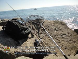 Serra_serranus_cabrilla_08(www.societatpescadorsbarcelona.com)