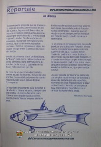 llissera_mugilidae_03(www.societatpescadorsbarcelona.com)