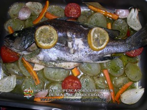 Corball_de_roca_sciaena_umbra_04(www.societatpescadorsbarcelona.com)