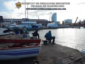 Concurs_pavo_26-11-2017_04_(www.societatpescadorsbarcelona.com)