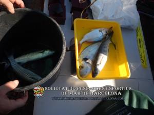 79e_concurs_burret_i_especies_2019_44_(www.societatpescadorsbarcelona.com)