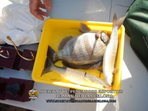 79e_concurs_burret_i_especies_2019_45_(www.societatpescadorsbarcelona.com)