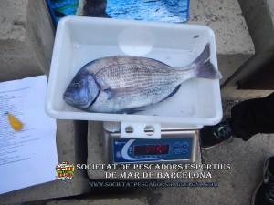 3r_concurs_embarcacio_fondejada_2019_30(www.societatpescadorsbarcelona.com)