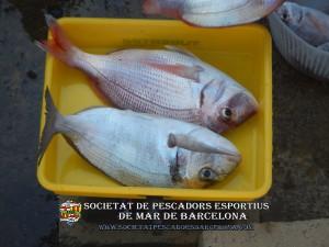 4t_concurs_embarcacio_fondejada_2019_30(www.societatpescadorsbarcelona.com)