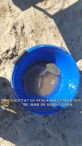 1r_concurs_mar_costa_2019_Prat_de_Llobregat_22(www.societatpescadorsbarcelona.com)