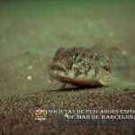 ¿Se extinguirán algunas especies de nuestro litoral? - Reflexión